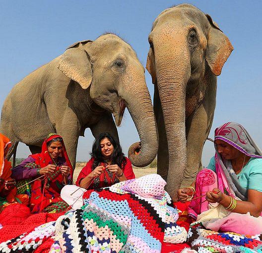 elephants4